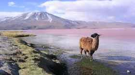 Turista nello Stato Bolivia – Ecco cosa vedere